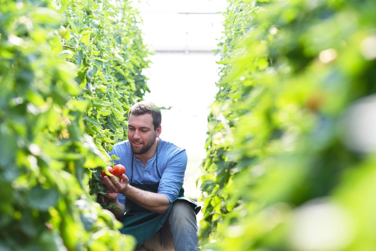 La clave para una buena aplicación de productos fitosanitarios