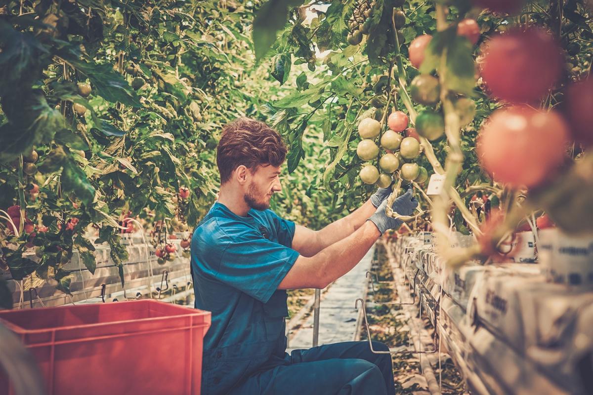 Cómo elaborar un Plan Empresarial para tener acceso a las ayudas de primera instalación en el sector agrario
