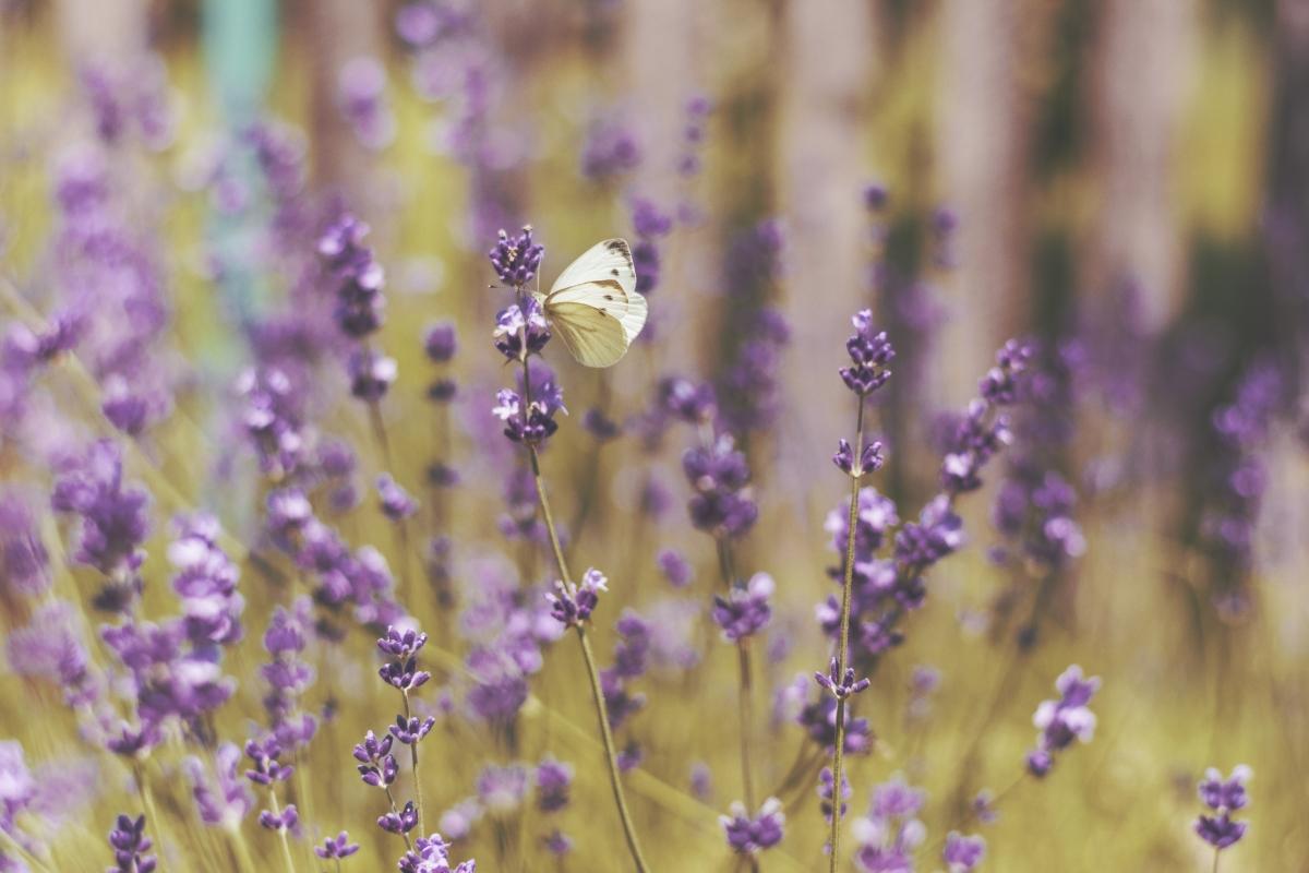 Plantas medicinales y aromáticas como opción de futuro