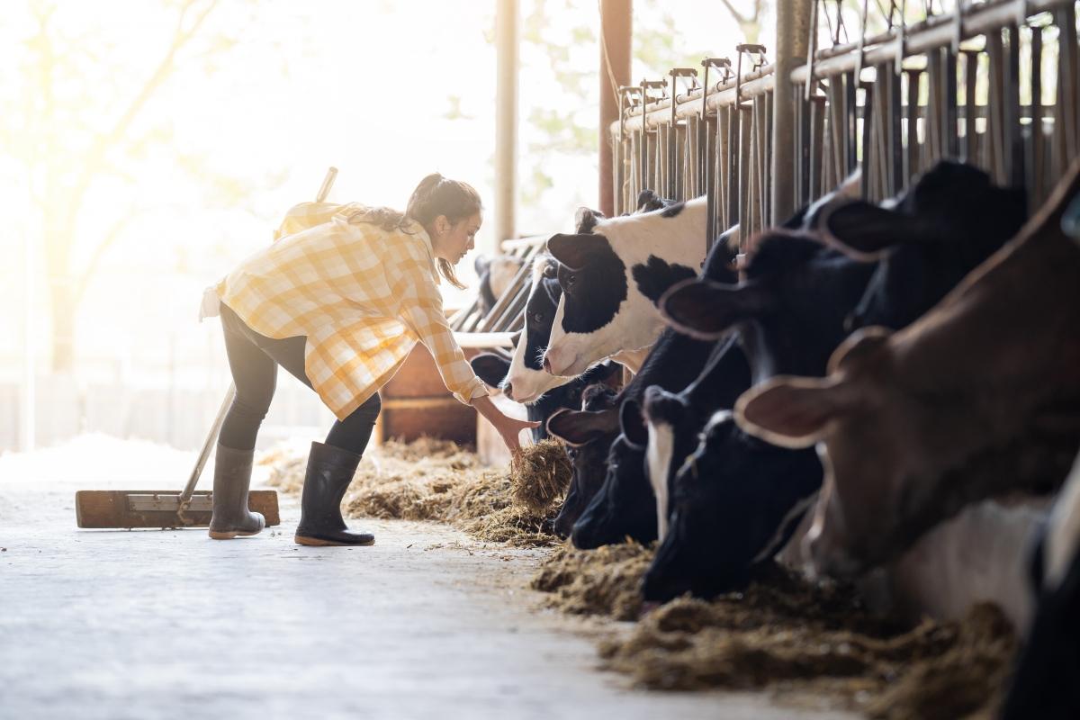 Mini – clase (I) ¿Cómo se produce la leche?