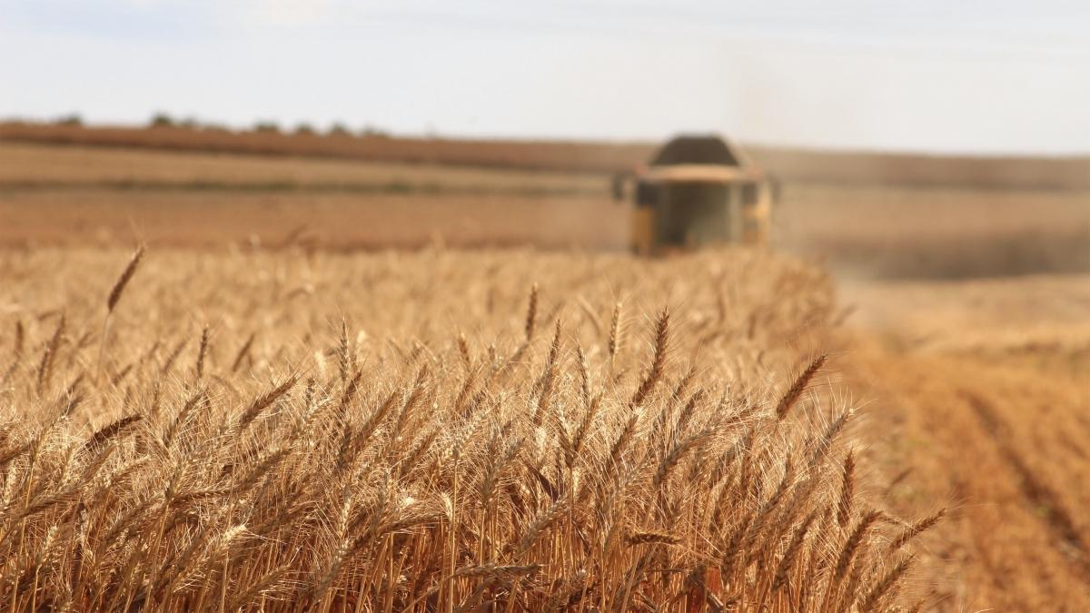 Mini-clase (II). ¿Cómo se producen los cereales?