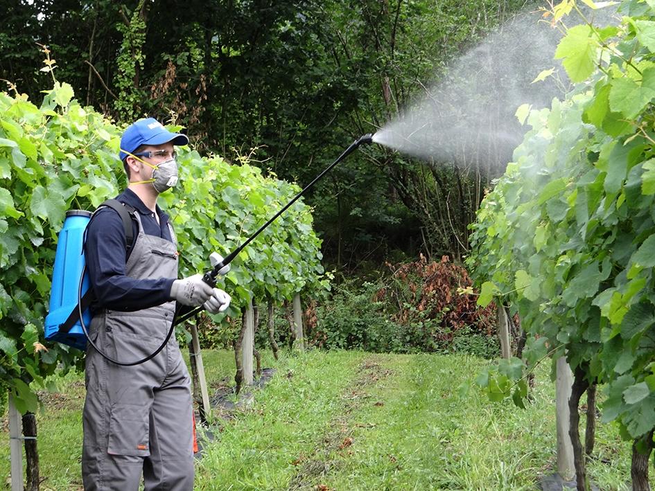 Productos fitosanitarios: calibrar equipo antes de aplicar.